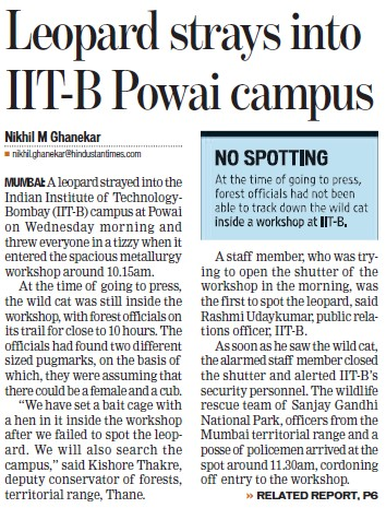 Leopard strays into IIT B Powai campus (Indian Institute of Technology (IITB))