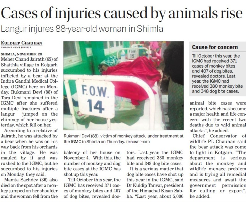 Cases of injuries caused by animals rise (Indira Gandhi Medical College (IGMC))