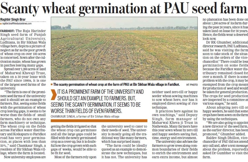 Scanty wheat germination at PAU seed farm (Punjab Agricultural University PAU)