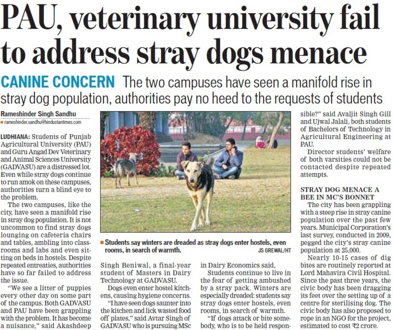 PAU, Veterinary Univ fail to address stray dog menace (Punjab Agricultural University PAU)