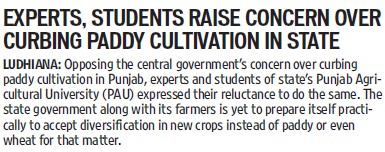 Experts, students raise concern over curbing paddy cultivation in state (Punjab Agricultural University PAU)