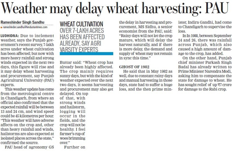 Weather may delay wheat harvesting, PAU (Punjab Agricultural University PAU)