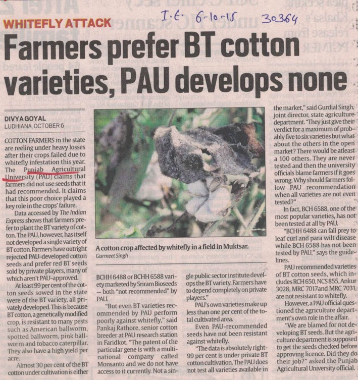 Farmers prefer BT cotton varieties, PAU develops none (Punjab Agricultural University PAU)