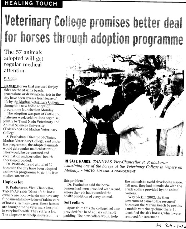 Veterinary college promises better deal for horses through adoption programme (Tamil Nadu Veterinary and Animal Sciences University, MADRAS VETERINARY COLLEGE)