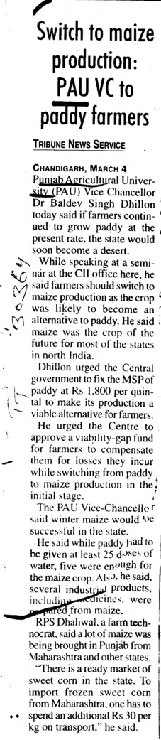 Switch to maize production, PAU VC to paddy farmers (Punjab Agricultural University PAU)