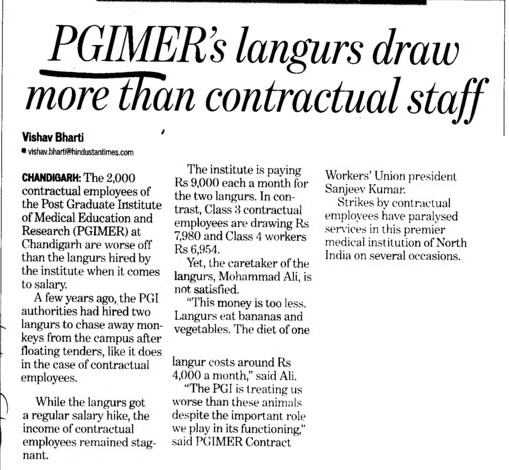 PGIMERs langurs draw more then contractual staff (Post-Graduate Institute of Medical Education and Research (PGIMER))