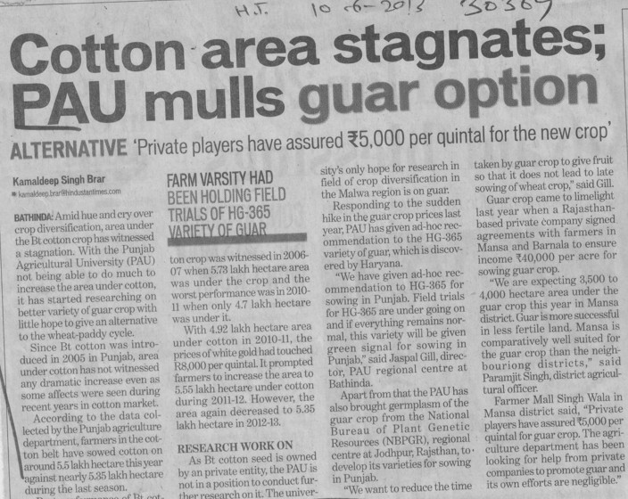 Cotton area stagnates, PAU mulls guar option (Punjab Agricultural University PAU)