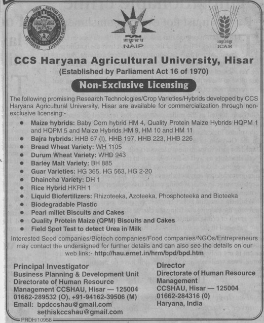 Maize hybrids and Bajra hybrids (Ch Charan Singh Haryana Agricultural University (CCSHAU))