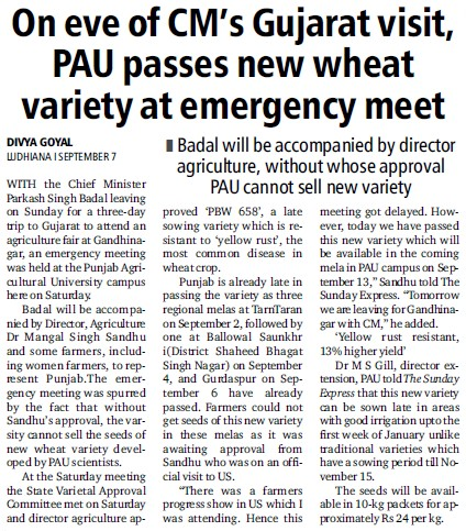 PAU passes new wheat variety at emergency meet (Punjab Agricultural University PAU)